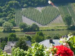Weinberg, Panoramablick, Ferienwohnung
