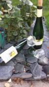 Winzer, Weißwein, Ferienweingut Bollig